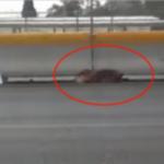 Mujer Valiente Se Lanza A Una Transitada Autopista Mexicana Para Rescatar A Un Perro Herido.